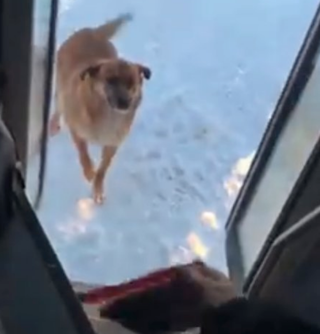 Bus Driver Feeds Stray